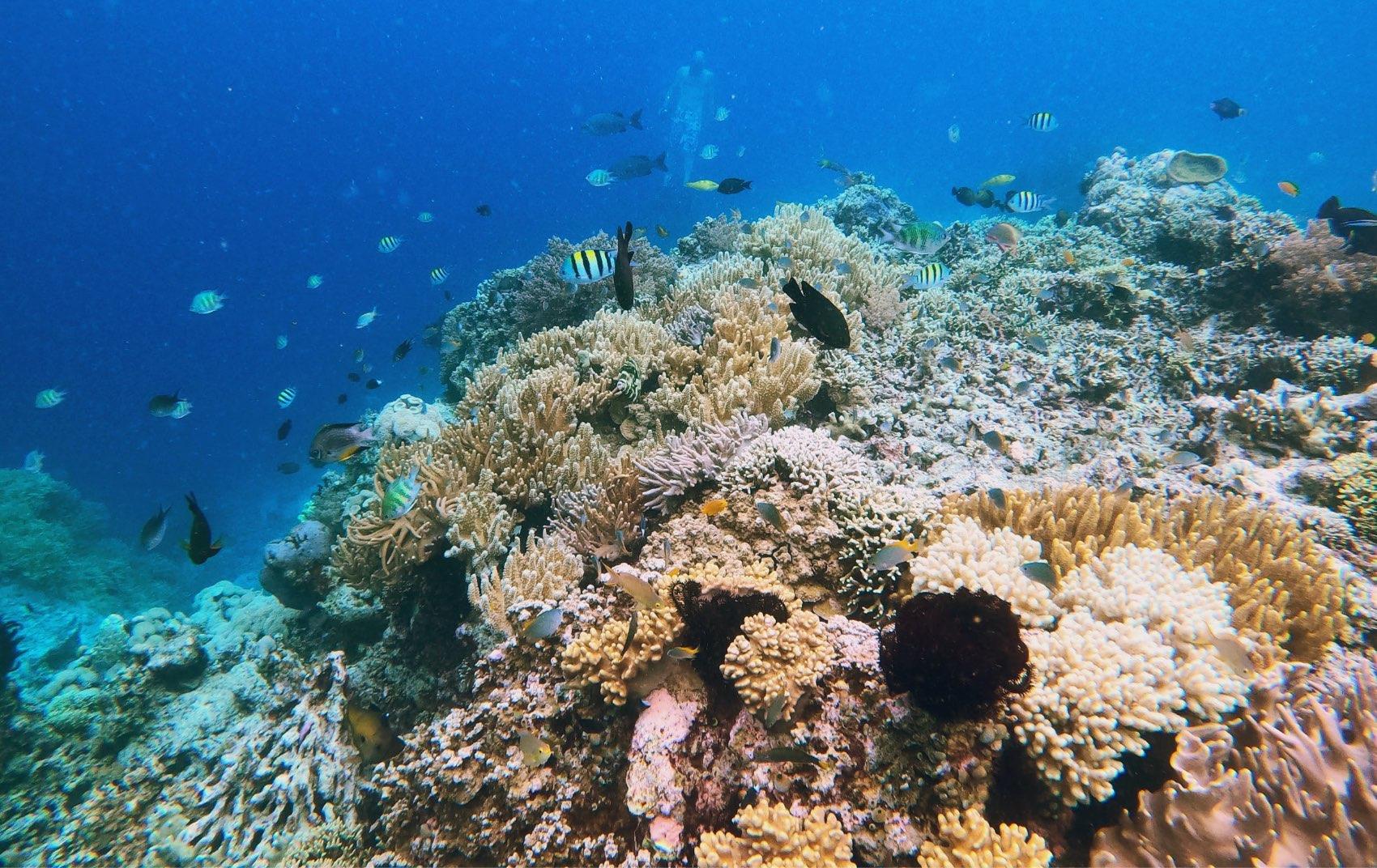 サンゴ礁 クルージング