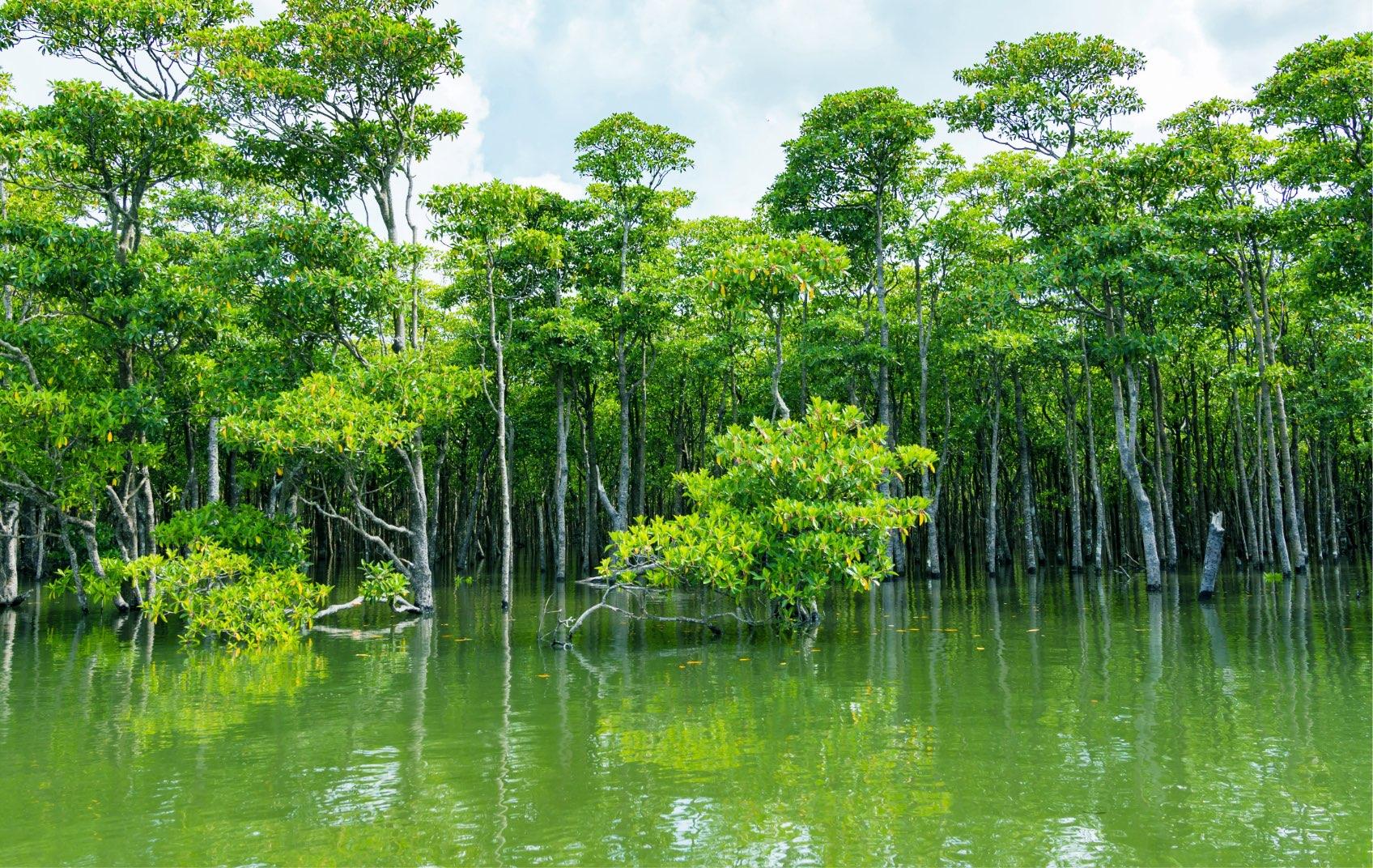 Mangrove Cruising